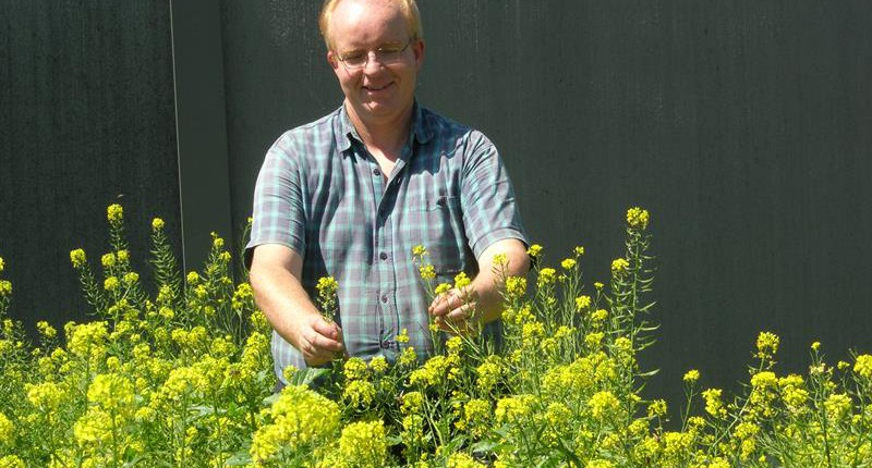 Reto Lutz im Gelb blühenden Senf